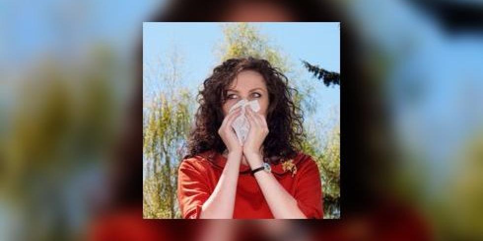 allergie importante au bouleau au cypr s quand traiter et comment page 2 e sant. Black Bedroom Furniture Sets. Home Design Ideas