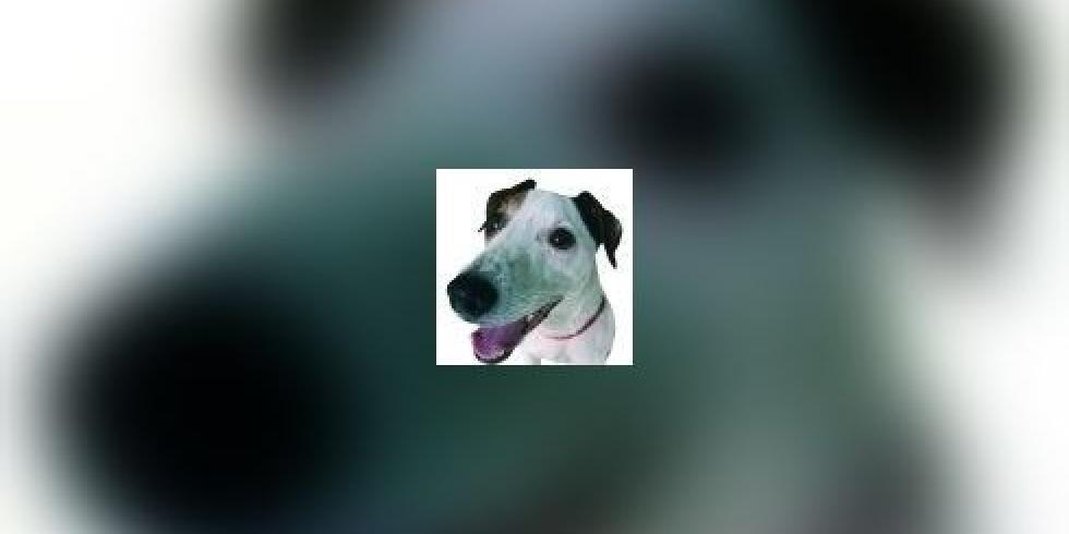 Vomissements chroniques des chiens et des chats avec e